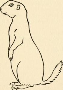 Caption: A sketch of a Manchurian marmot, 1914. The animals are a known reservoir of bubonic plague.  Source: https://www.flickr.com/photos/internetarchivebookimages/14564273159/